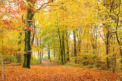 Foto-Lamellen - Laubwald im Herbst