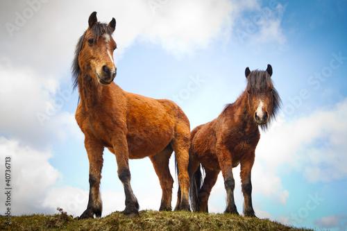 irlandzkie-konie-na-wzgorzu