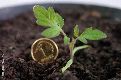 Grosz roślinka - fototapety na wymiar