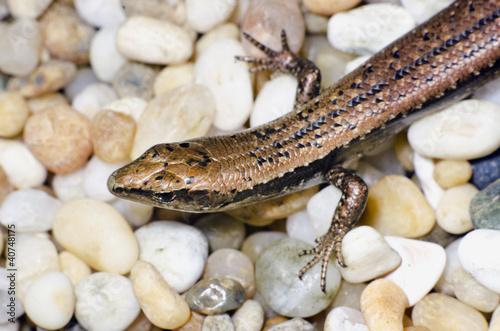 Poster Crocodile Wildlife and Animals - Lizards