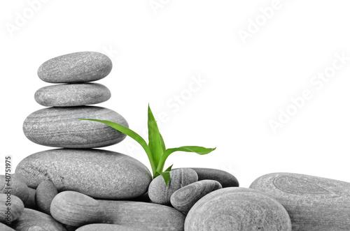 Tuinposter Zen Growth