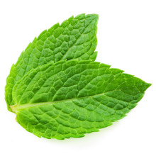 Two Fresh Mint Leaves Isolated...