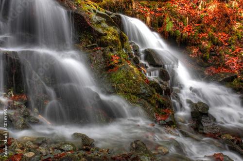 waterfall in beech forest