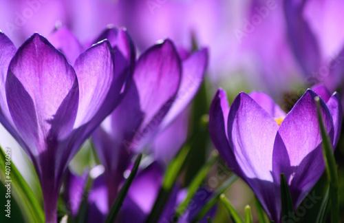 purple light - 40786057