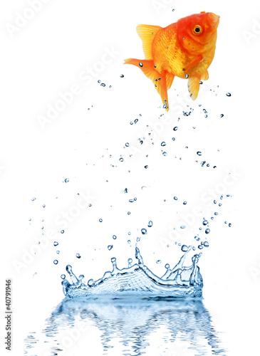 skakac-ryba-z-wody-pojecie-wyzwanie