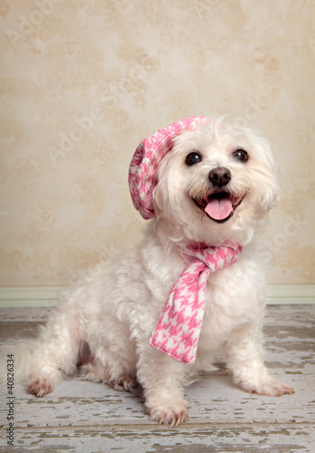 Photo  Trendy pooch