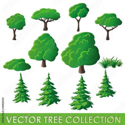 Fototapeta Vector Tree Collection obraz