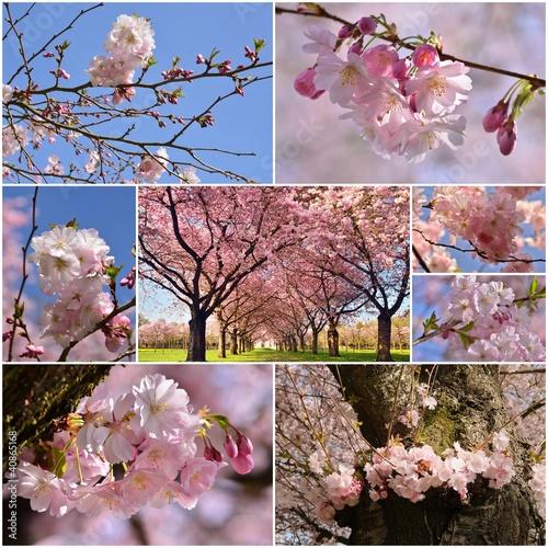 Fototapeta wiosna kolaz-ze-zdjeciami-wiosennych-kwiatow