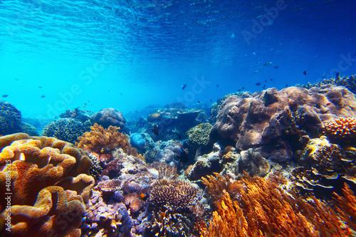 Fotobehang Koraalriffen Reef