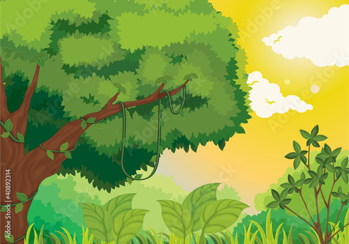 Photo sur Aluminium Forets enfants Jungle at sunset