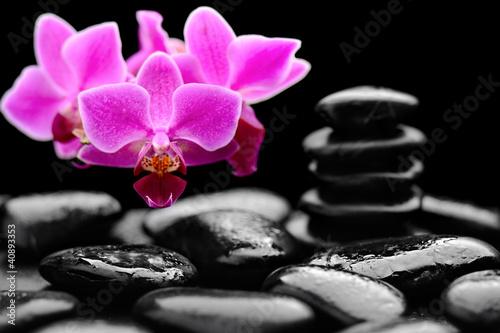 Obraz orchid - fototapety do salonu