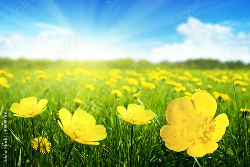 Aluminium Prints Yellow Field of spring flowers