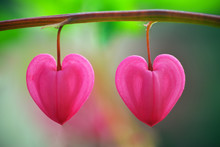 Two Heart Flower