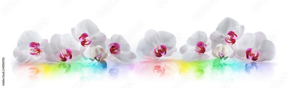 Fototapety, obrazy: Orchideen 3
