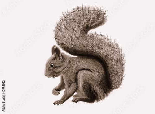 Fotografía  squirrel
