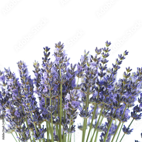 Photo  Purple lavender flowers