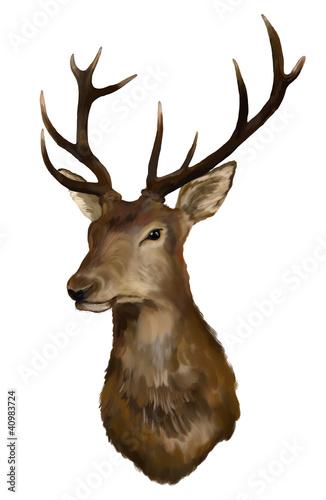 Fotografie, Obraz  Deer head on a white background