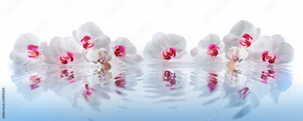 Fototapety, obrazy: Orchideen im Wasser
