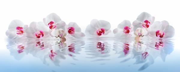Fototapeta Orchideen im Wasser