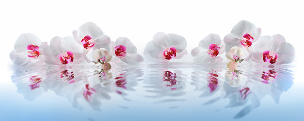 Fototapeta Storczyki Orchideen im Wasser