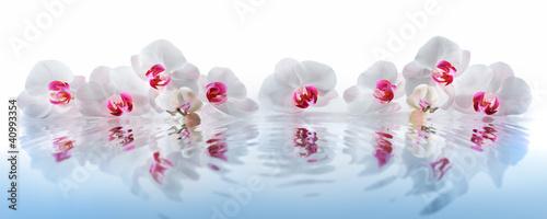 Stickers pour porte Orchidée Orchideen im Wasser
