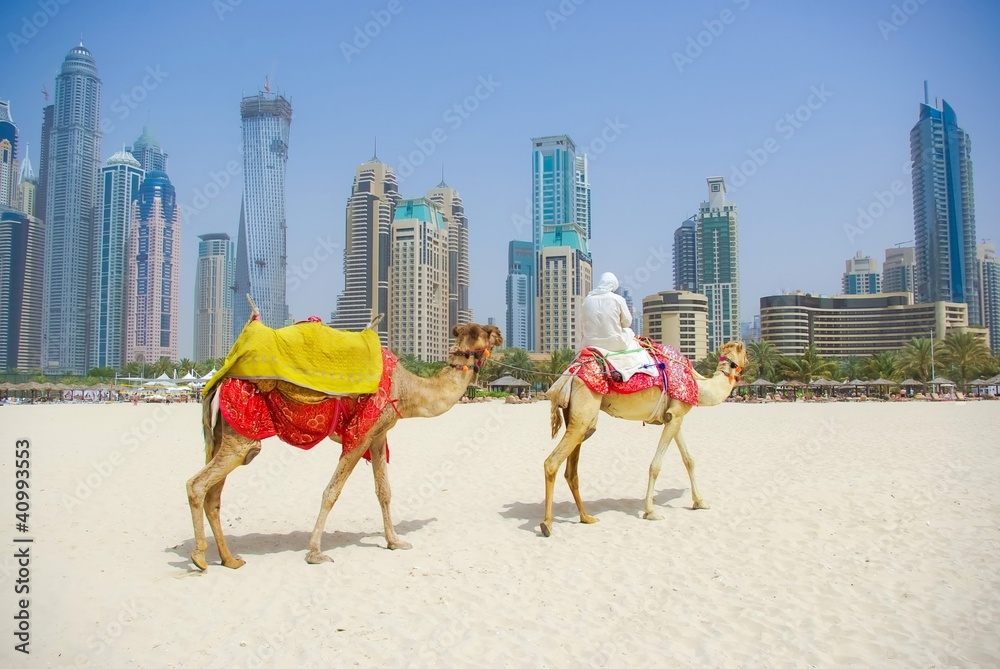 Dubai camel on the town scape backround united arab emirates poster dubai camel on the town scape backround united arab emirates poster sold at abposters thecheapjerseys Image collections