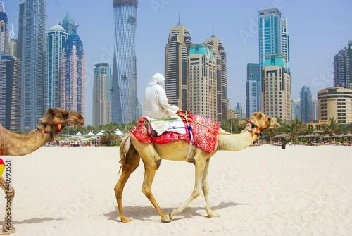 Spoed Fotobehang Kameel Dubai Camel on the town scape backround, United Arab Emirates.