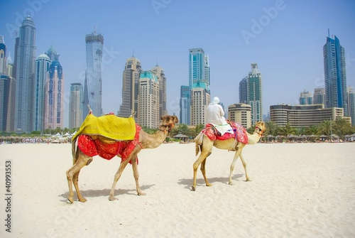 In de dag Dubai Dubai Camel on the town scape backround, United Arab Emirates