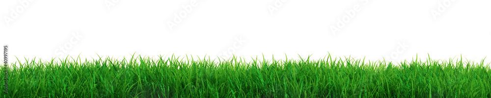 Fototapeta Fresh grass