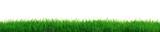 Fresh grass - 40997195
