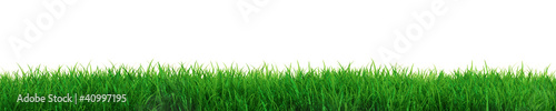 Obraz Fresh grass - fototapety do salonu