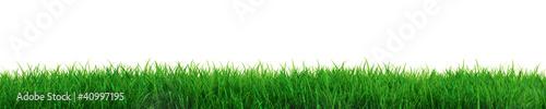 Fototapeta Fresh grass obraz