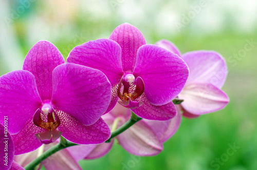 Foto op Canvas Orchidee orchid