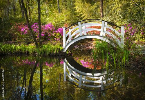 Blooming Spring Azalea Flowers Garden Nature South Charleston SC