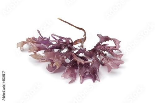 Obraz na płótnie Star shaped moss seaweed