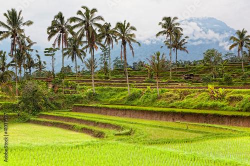 Foto op Aluminium Indonesië terrace rice fields, Bali, Indonesia