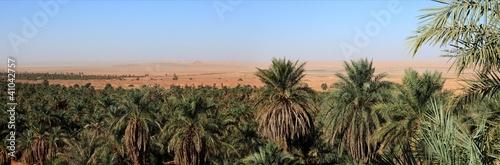 oazy-z-sahary