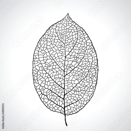 Obraz Black macro leaf natural isolated. Vector illustration. - fototapety do salonu