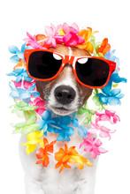 Dog With Hawaiian Lei Over The...
