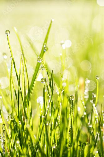 trawa-swieza