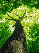 Leinwanddruck Bild - forest