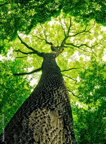Fototapeten Wald forest