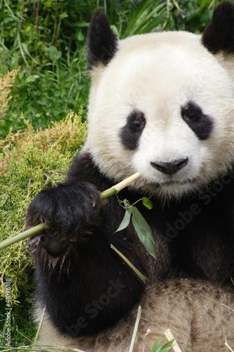 Recess Fitting Panda Panda