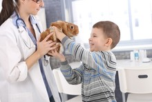 Laughing Boy Getting Back Rabbit From Vet
