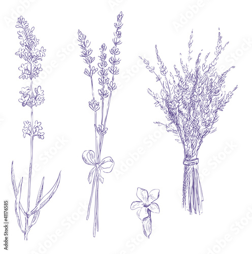 Photo lavender pencil drawing vector set