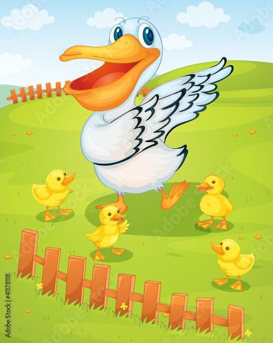 Poster Oiseaux, Abeilles Pelican
