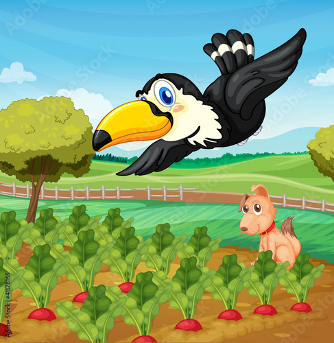 Garden Poster Dogs Toucan over farm