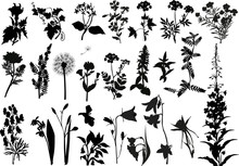 Collection Of Wild Flowers Sil...
