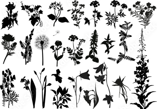 Obraz na plátně collection of wild flowers silhouettes
