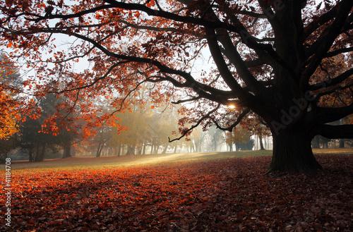stary-bukowy-drzewo-w-jesiennym-parku